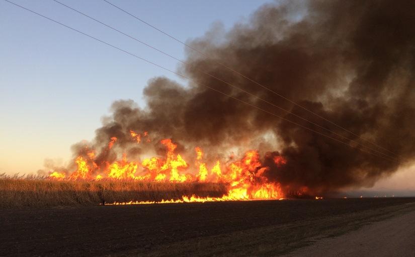 Sugar cane burning isincredible!