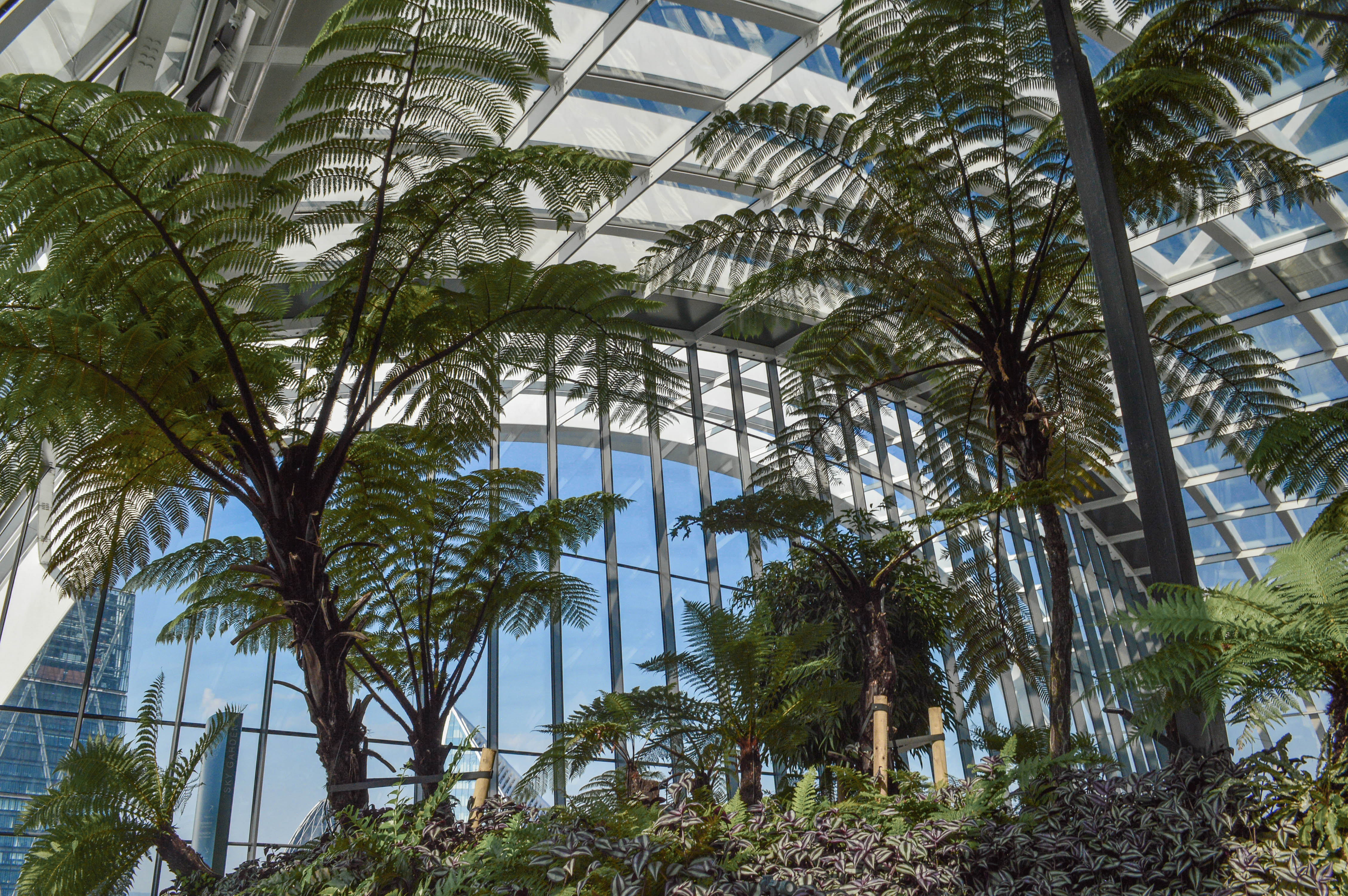 View of tall trees in Sky Garden