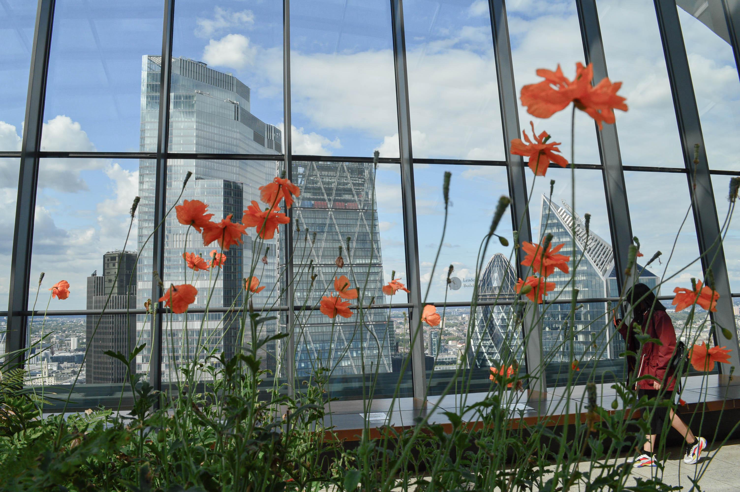 City of London skyline through the flowers